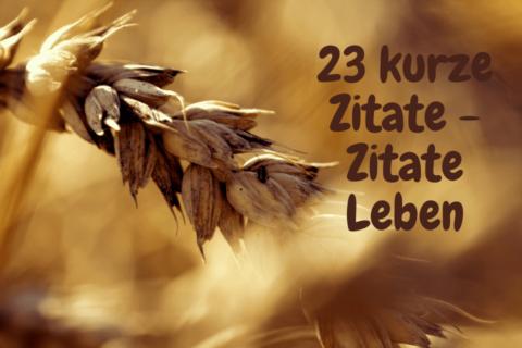 Ein Korn mit der Aufschrift - 23 kurze Zitate - Zitate Leben