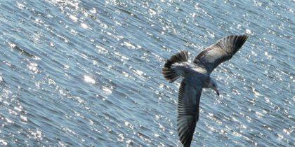 cleverer Vogel