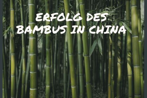 Erfolg des Bambus in China